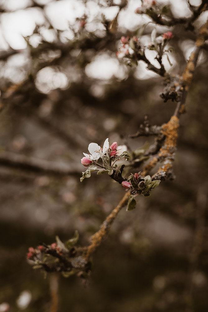 Frühing Blumen Blüten Illereichen